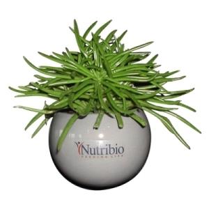plante-depolluante-image